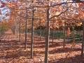 acer-autumnblz-10-30-08
