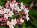 vib-mohawk-flower